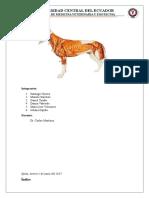 Anatomia Informe Diseccion