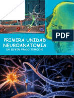 Clase Neuro Anatomia