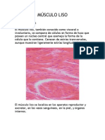 Musculo Liso [Histologia]