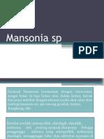 Mansonia Sp