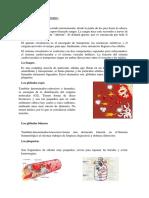 Aparatos Circualtorio Reproductor Respiratorio