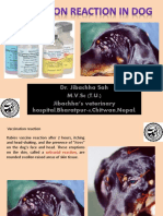 Vaccination Reaction in Dog, a Dr.Jibachha Sah Presentation