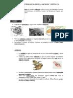 ANIMALES VERTEBRADOS Anfibios Peces Reptiles