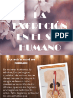 excresion en el ser humano