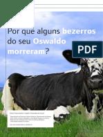 Por que os bezerrros do seu Oswaldo morreram?