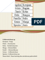 Identifikasi dgn MolecularTechniques