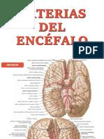 Arterias Del Encéfalo
