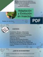 Adaptación y Evolución en Insectos