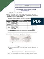 alimentação animais.doc