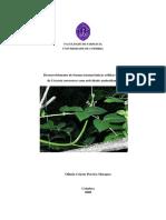 Desenvolvimento de Formas Farmacêuticas Sólidas Orais de Unc