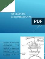 Traduccion y Modificaciones Postraduccionales