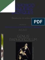 [Orchidaceae-Book] Sabaté, P. a - Genus Paphiopedilum