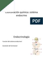 09 Coordinación química-sistema endocrino