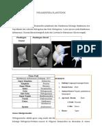 Foraminifera Plangtonik