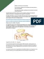 Biomecanica del hombro . anat. topo.docx