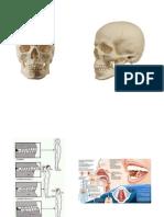 OSTEOLOGIA_CRANEO.pdf;filename-= UTF-8__OSTEOLOGIA CRANEO