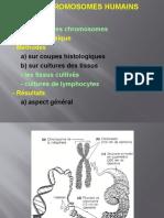 1-Chromosomes Humains - Copy