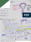 3 Meninges.pdf
