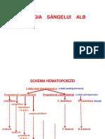 Sîngele Alb fiziopatologie