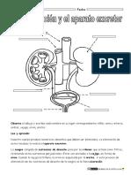 Aparato-excretor-primaria.pdf