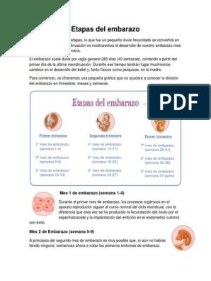 etapas del embarazo por mes pdf