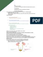 Excretory and Urinary System