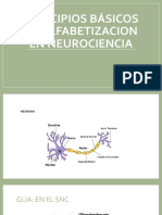 Principios Básicos de Alfabetizacion en neurociencia
