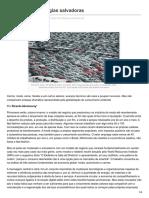 Outraspalavras.net-O Mito Das Tecnologias Salvadoras(2)