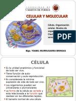 2.celula