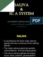 Saliva & IG A system