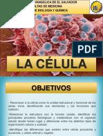 1. La celula