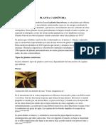 PLANTA CARNÍVORA.docx