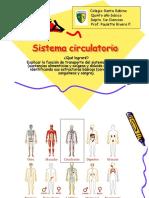 Sistema Circulatorio, 5to (1)