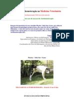 Auto-hemoterapia cura cachorro Akita Inu