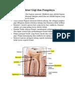 Struktur Gigi dan fungsinya.docx