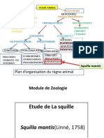 Zoologie Tp 5squille 2015-2016 f