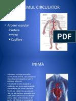 Activitatea_cardiaca.pptx