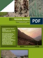 Region Yunga