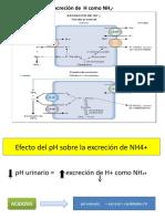 Excreción de  H como NH4+