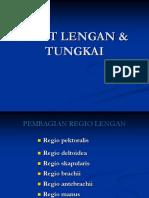 Otot Lengan Jambi