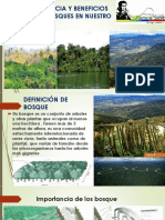 Importancia Bosques