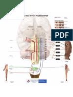 Rule of 4 Illustration Brainstem (LITFL)