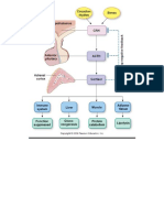 Simple Adrenal Synthesis Pathway