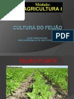 11-08-23-culturadofeijao_2ªaula.pdf