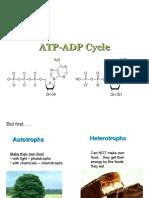 1- ATP-ADP_Cycle