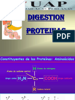 Clase 9. Digestion Proteinas