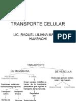 TRANSPORTE CELULAR.ppt