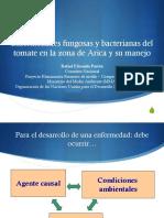 2. Enfermedades Del Tomate en Arica y Parinacota