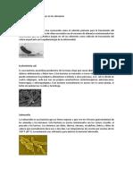 Diferentes Microorganismos en Los Alimentos