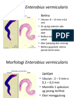 Morfologi Dan Siklus Hidup Enterobius Vermicularis